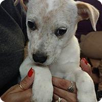 Adopt A Pet :: Dianne - Wichita Falls, TX
