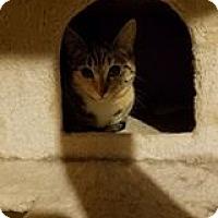 Adopt A Pet :: Maggie - Florence, KY