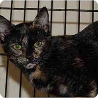 Barn Cats For Adoption In Ct