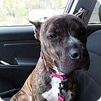 Adopt A Pet :: Kali - Woodlawn, TN