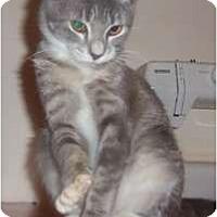 Adopt A Pet :: Kitten2 - Orlando, FL