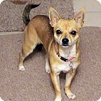 Adopt A Pet :: Poppy - Lynnwood, WA