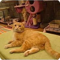 Adopt A Pet :: Saber--PETSMART - Muncie, IN