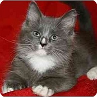Adopt A Pet :: Titus - Arlington, VA