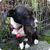 Adopt A Pet :: LEO - Portland, OR