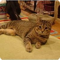 Adopt A Pet :: Yoko--PETSMART - Muncie, IN