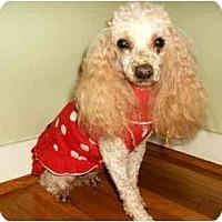 Adopt A Pet :: Bethany - Mooy, AL