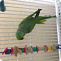 Adopt A Pet :: Zeki - Punta Gorda, FL