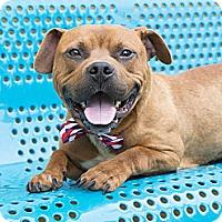 Adopt A Pet :: Butters - nashville, TN