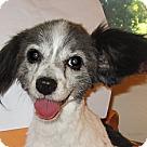Adopt A Pet :: Bellini