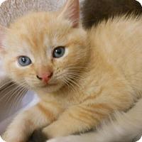 Adopt A Pet :: Ester - Reston, VA