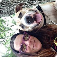 Adopt A Pet :: Muffin - Orlando, FL