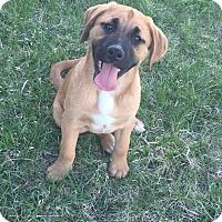 Adopt A Pet :: Fozzie - Winchester, VA