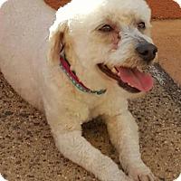 Adopt A Pet :: Moxie - Costa Mesa, CA