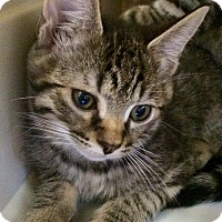 Adopt A Pet :: Ash #4 - Lunenburg, MA