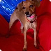 Adopt A Pet :: Nina - Campbell, CA