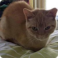 Adopt A Pet :: Mimosa - Toronto, ON