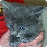 Adopt A Pet :: Eli - Montgomery, IL