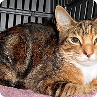 Adopt A Pet :: Nikita - Chattanooga, TN