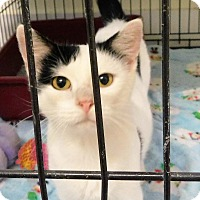 Adopt A Pet :: Esmeralda - Montgomery City, MO