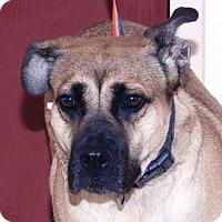 Adopt A Pet :: Meelah - McDonough, GA