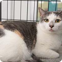 Adopt A Pet :: Jackie - Merrifield, VA