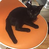 Adopt A Pet :: SOS - Toronto, ON