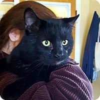 Adopt A Pet :: Panther - Salisbury, MA