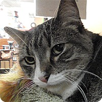 Adopt A Pet :: Nala - Fairfax, VA