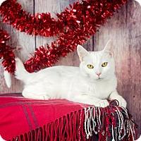 Adopt A Pet :: Harper - Columbia, IL