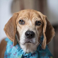 Adopt A Pet :: Leif - Kenner, LA
