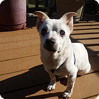 Adopt A Pet :: Bubbie - Whitehall, PA