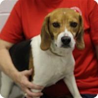 Adopt A Pet :: Bosco - Elyria, OH