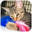 Photo 1 - Domestic Shorthair Cat for adoption in Deerfield Beach, Florida - Carson & Koi