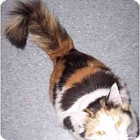 Adopt A Pet :: Maui - Delmont, PA