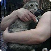 Adopt A Pet :: Jubilee - Reston, VA