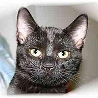Adopt A Pet :: Silloette - Montgomery, IL