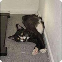 Adopt A Pet :: JJ - Davis, CA