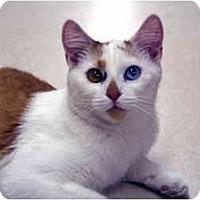 Adopt A Pet :: Bizie - Racine, WI