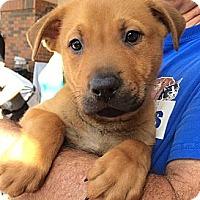 Adopt A Pet :: Bret - Phoenix, AZ