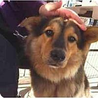 Adopt A Pet :: Gina - Alexandria, VA