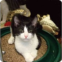 Adopt A Pet :: Deuce - Fort Lauderdale, FL