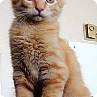 Adopt A Pet :: Patrick Hemingway - Chicago, IL