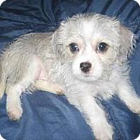Adopt A Pet :: Wolfie - Phoenix, AZ
