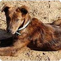 Adopt A Pet :: Wally Walleroo - Staunton, VA