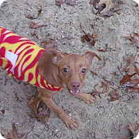 Adopt A Pet :: Ruby - Muskegon, MI