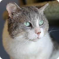 Adopt A Pet :: Deltron - Chicago, IL