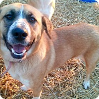 Adopt A Pet :: Maddie - Glastonbury, CT