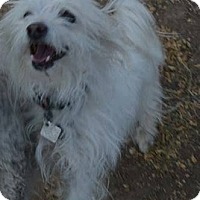 Terrier (Unknown Type, Small) Mix Dog for adoption in Peyton, Colorado - Curly