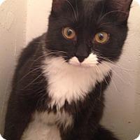 Adopt A Pet :: Schnitzel - Gainesville, FL